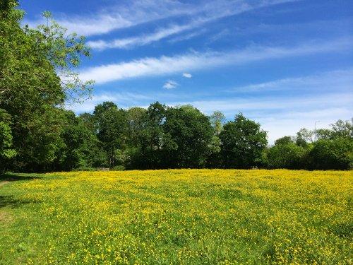 Fields near Malvern Park,Solihull