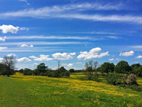 Fields near Malvern Park,Solihull 2