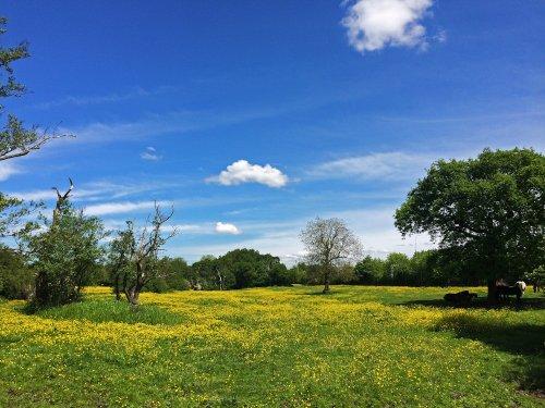 Fields near Malvern Park,Solihull 3