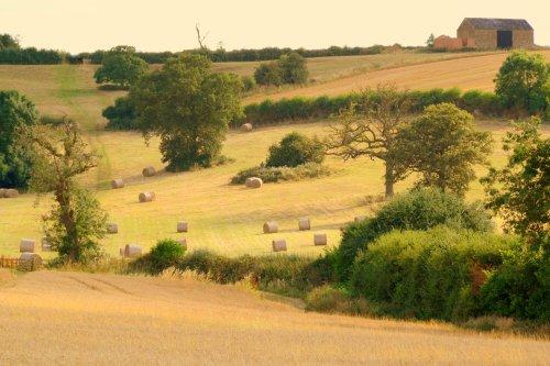 Snorscombe Farm