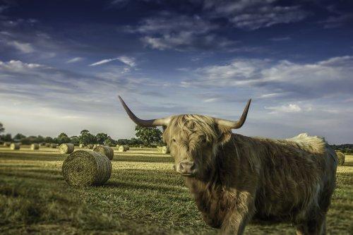 sheepy fields