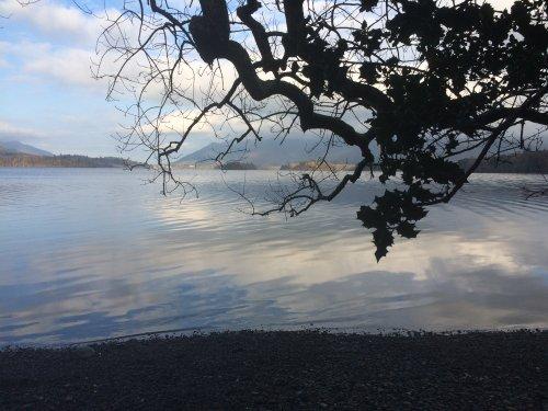 Gnarled tree on shores of Derwentwater