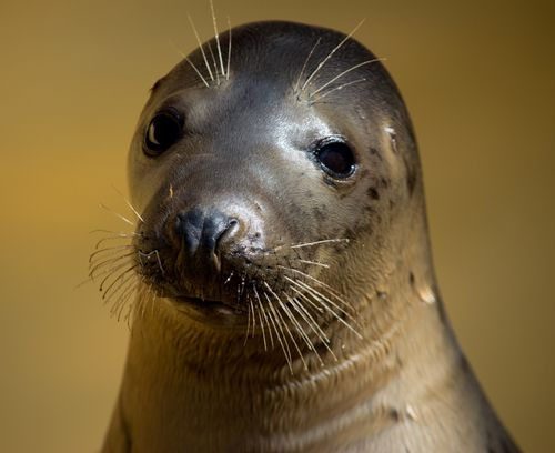 Rescued Seal at Mablethorpe Seal Sanctuary and Wildlife Centre