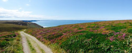 A Walk through the heather at The Beacon, St Agnes, Cornwall