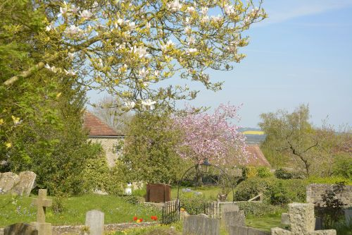 Spring from the Churchyard, Stanton St.John, Oxfordshire