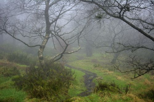 Foggy Path, The Roaches, Upper Hulme, Staffordshire