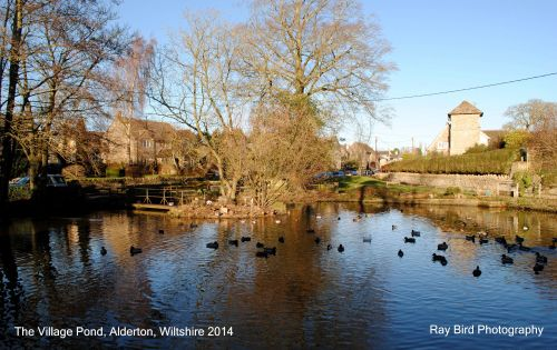 The Village Pond, Alderton, Wiltshire 2014