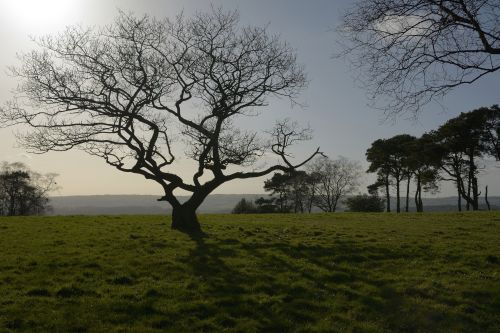 Tree Silhouette on Gun Hill near Meerbrook above Leek, Staffordshire