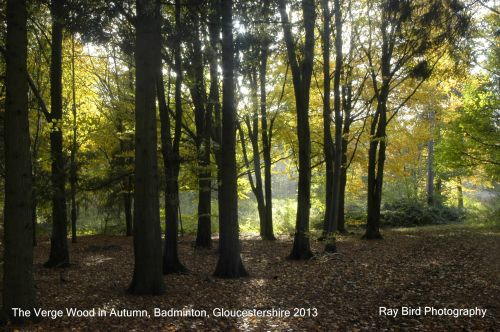 The Verge Wood in Autumn, Badminton, Gloucestershire 2013