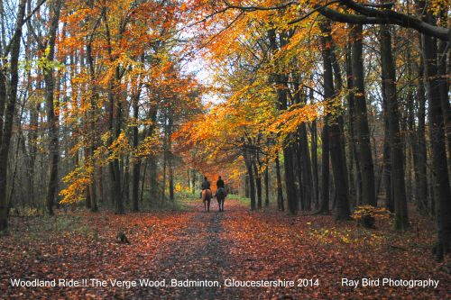 Woodland Ride, The Verge Wood, Badminton, Gloucestershire 2014