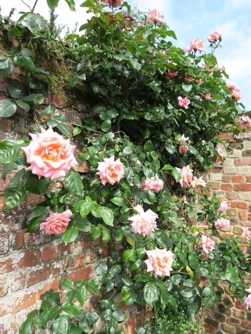 The Old English Rose Garden of St Edmundsbury Cathedral - Bury St Edmunds