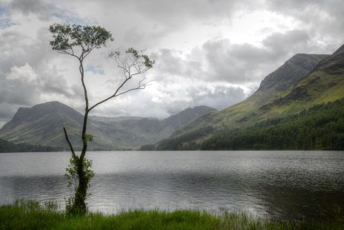 The Lone Tree, Buttermere, Cumbria