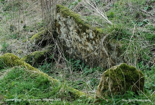 'Giants Grave', Luckington, Wiltshire 2008