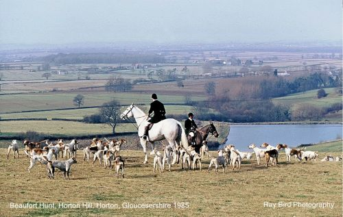 Beaufort Hunt, Horton Hill, Horton, Gloucestershire 1985