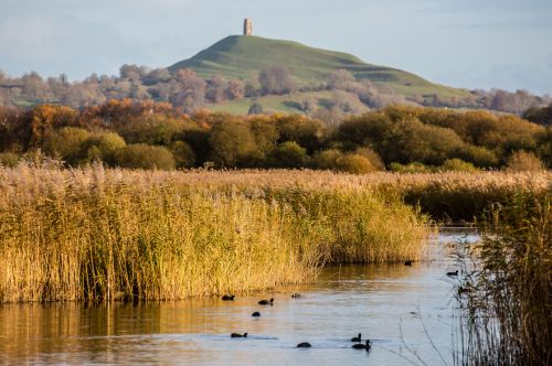 Glastonbury Tor from Ham Wall