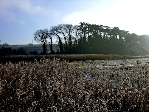 Budleigh Salterton's reed beds