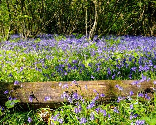 Ancient Kent Woodlands