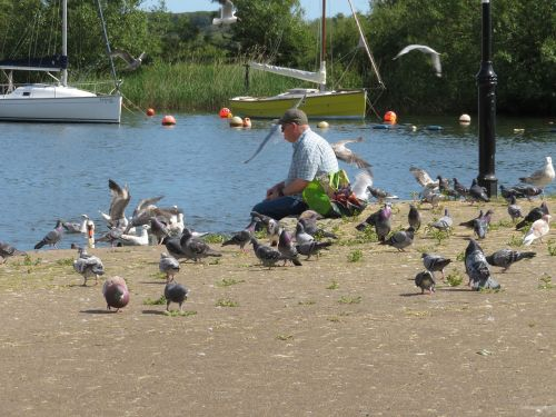 Feeding the swans at Town Quay in Christchurch