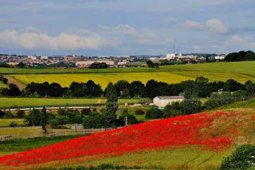 Field of Poppies, Cudworth