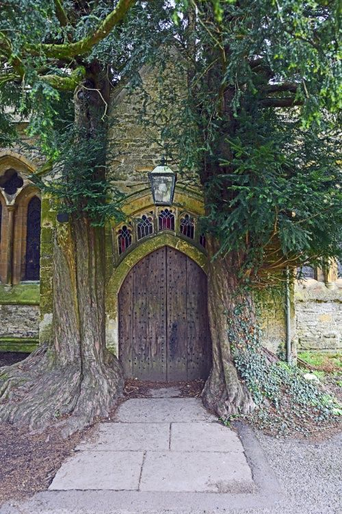 Ancient Yew trees each side of the Northj Porch, St. Edward's Church Stow on the Wold