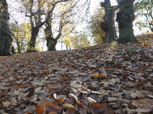 Greenwich Park in Autumn