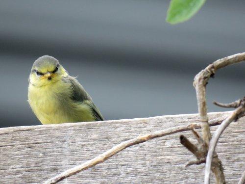 lockdown garden  ..angry bird