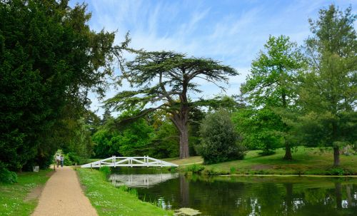 The Wollett Bridge and the Great Cedar in Painshill Park