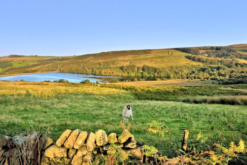 Strines Reservoir with Ram