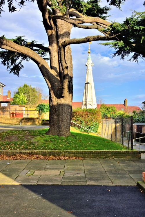 The Cedar Tree and Church Spire on Round Hill