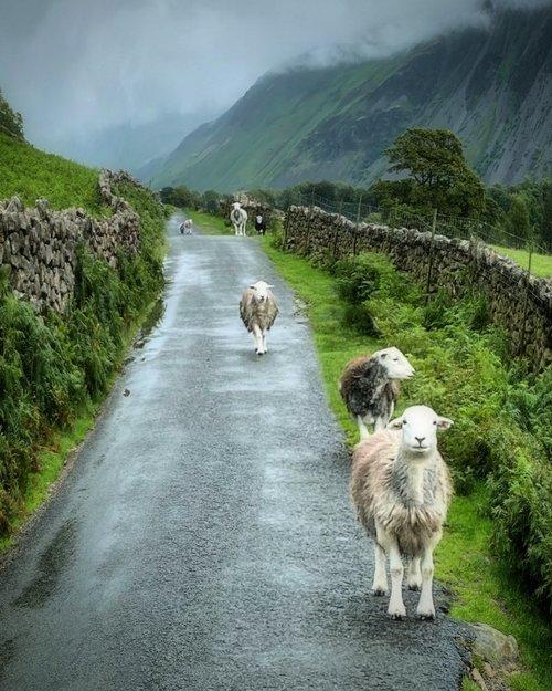 Perfect Traffic Jam    Lake District