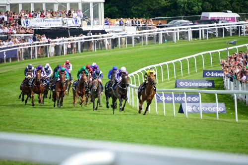Into the Final Straight in the Epsom Derby