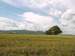 A view of the Malvern Hills from a road near Upton Upon Severn