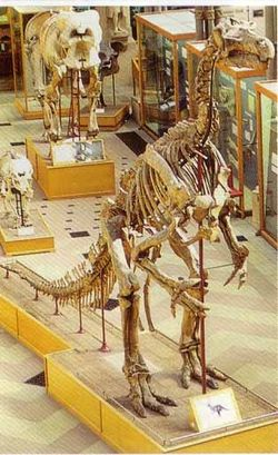 A picture of University Museum of Natural History