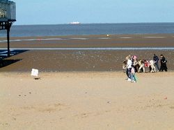 Cleethorpes beach donkeys