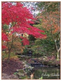 Autumn Comes to Exbury Gardens in Hampshire. Have a wonderful day out.