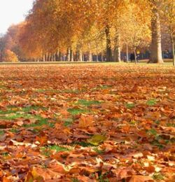 London - Hyde Park in Autumn.