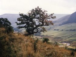 Alport Dale, Hope Forest, Derbyshire (Peak District National Park)