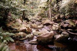 Burbage Brook, Padley Gorge