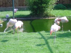 Flamingo Park, Seaview, Isle of Wight