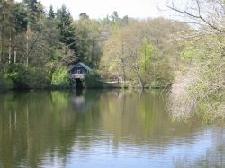 Winkworth Arboretum in Surrey