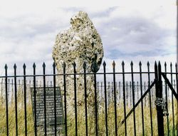 The rollright stones, Oxfordshire.