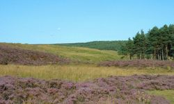 Wheeldale, North York Moors