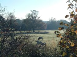 Frosty morning on the outskirts of Calmore, near Southampton, Hampshire