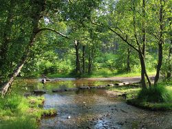 The stepping stones, Cannock Chase, Staffordshire
