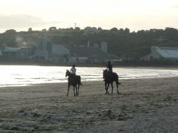 Horses galloping at Parr Sands, Nr St. Austell. Cornwall