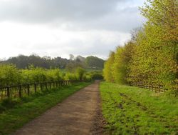 A bridleway in Shipley Country Park, Derbyshire - looking towards Shipley Hill