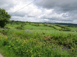 Devon countryside from the country lanes near Dalwood, Devon