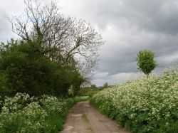 Mill Lane. Normanby-by-Spital. Lincolnshire