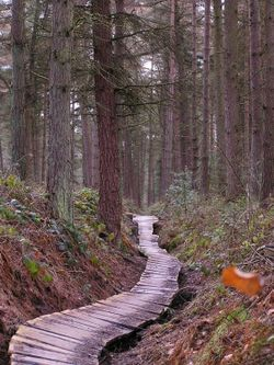 A forest trail, Dalby Forest, North Yorkshire