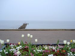 Lowestoft, Suffolk.  - Flowers at Sea front..